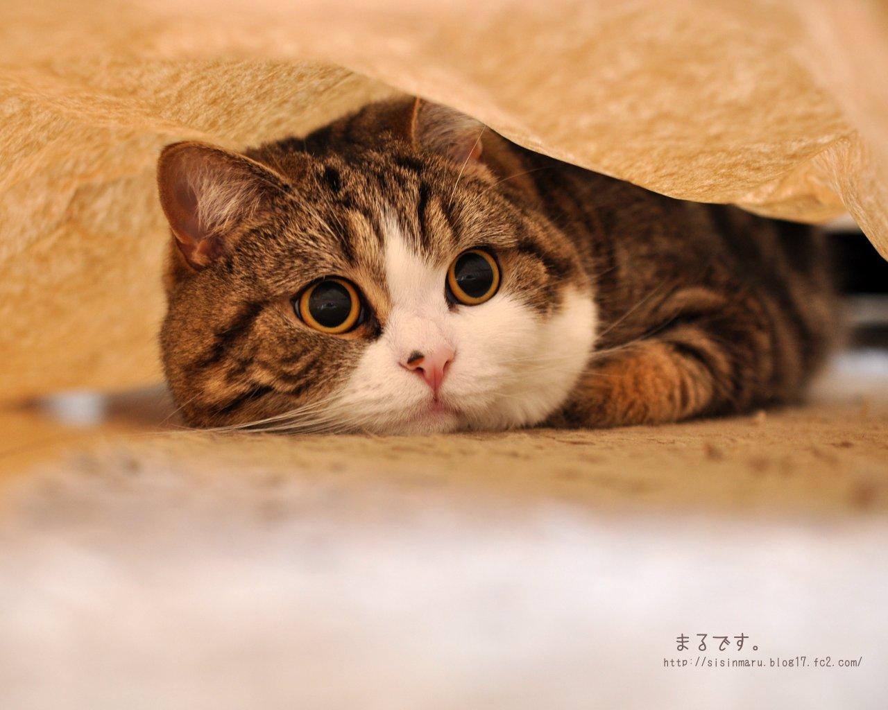 猫好き必見】まるさん ...