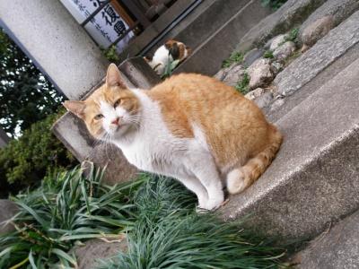 チョツトカメラ目線が気になる猫