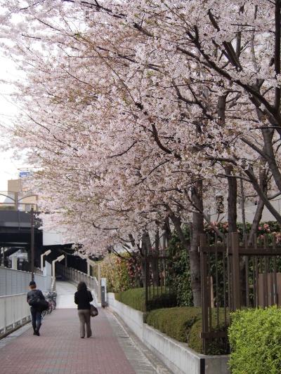 写真 JR池袋西口付近風景 桜並木