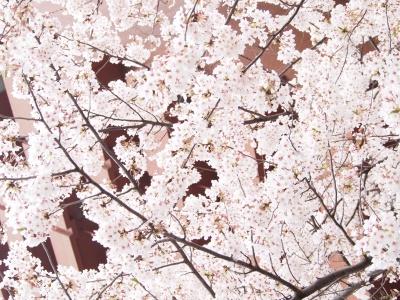 写真 JR池袋東口付近風景 桜全景