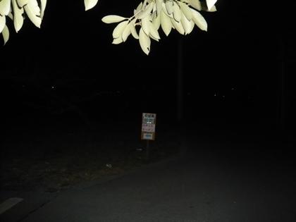 画像 051