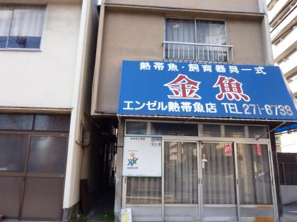 """熱帯魚専門店 """"金魚"""""""