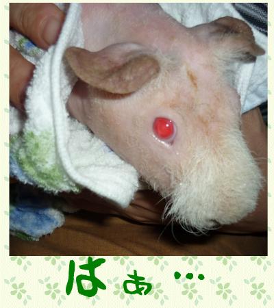 お風呂2010.07.3