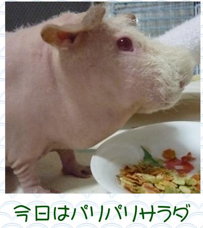 サラダの日