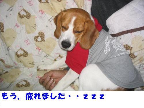 IMG_4142s-1_20101125095010.jpg