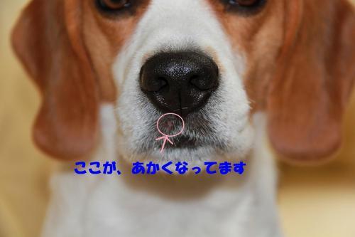 IMG_9774-1.jpg