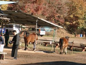 木曽馬牧場