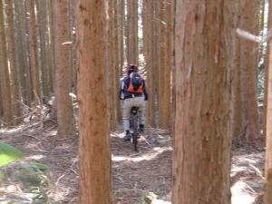 木々の隙間を進む