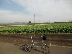三浦大根畑