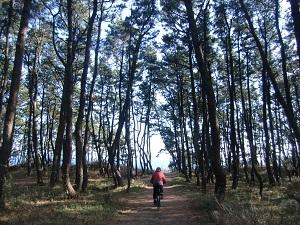 松林を進む