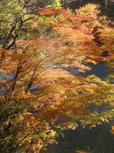 色付いた木々