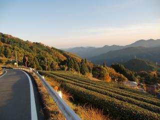 茶畑のある風景#
