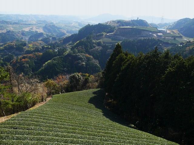 004_茶畑