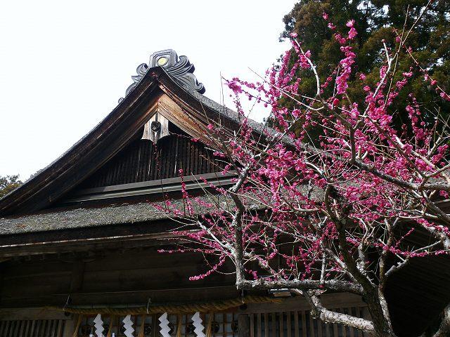 31_小国神社