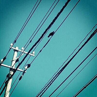 フリー画像・青空と電線と