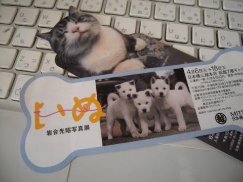 猫の次は…岩合光昭さんの「いぬ」展のチケットは骨型