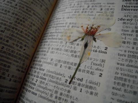押し花には辞書がいい