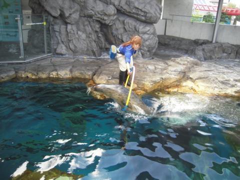 しながわ水族館、楽しいです