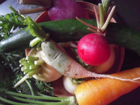 きれいな野菜を有楽町で