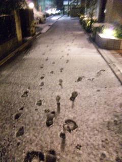 雪積もったー\(^O^)/