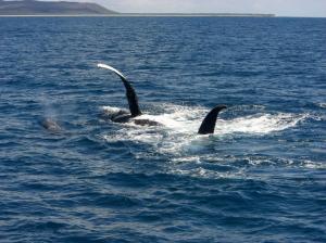 whale (4)