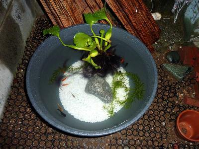 我が家の金魚鉢.jpg