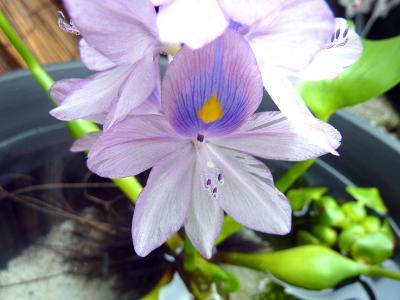 花のアップ.jpg