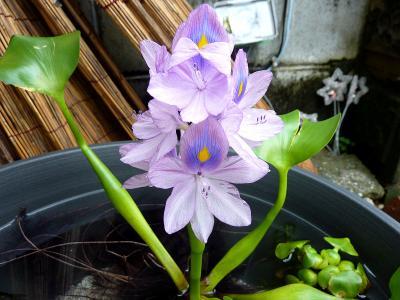 花の姿.jpg