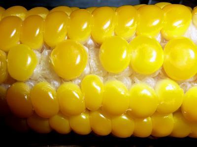 卵の黄身が並んでいるよう.jpg