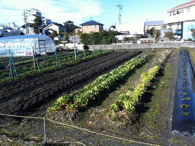 shizuoka-hatake.jpg
