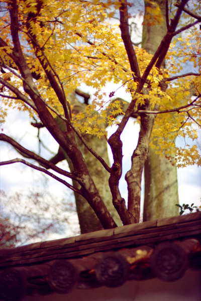 寺壁際秋景