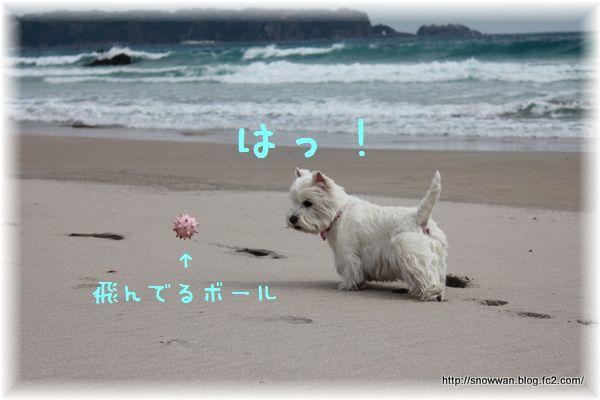 257_20120409111715.jpg