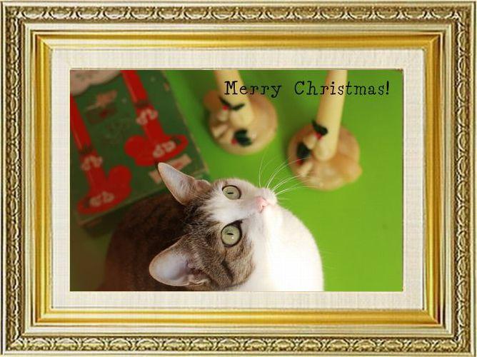 ねこ 猫 クリスマス祭り29まやさま家 Merry Christmas