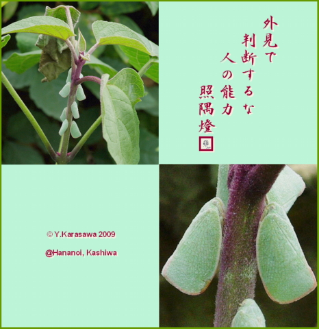091113青羽羽衣