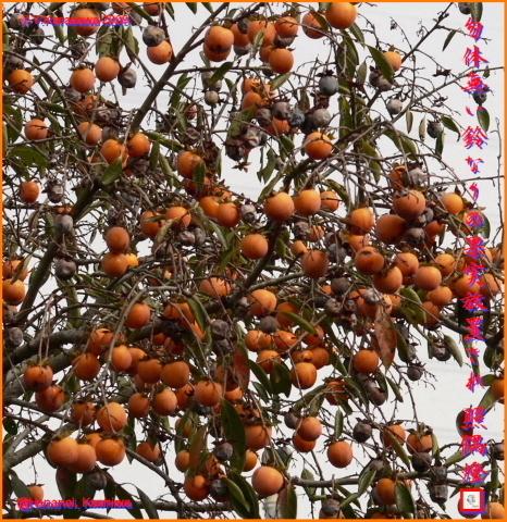 091121小柿
