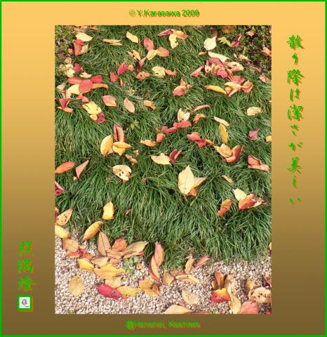 091125桜の落葉