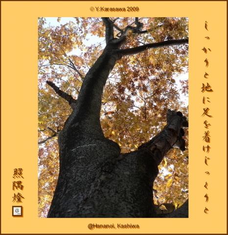 091126欅の紅葉