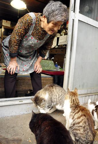 石巻猫80匹