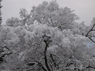 20111223-24生杉 022