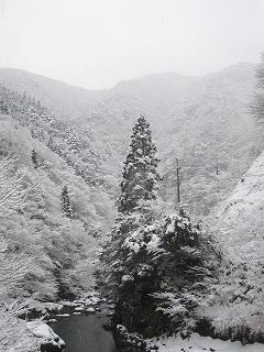 20120128-29生杉 002