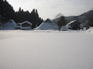 20120205生杉 035