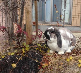 お庭で雑草を食べるそらくん