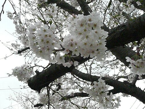 2010-04-03 002