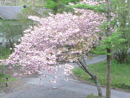 2010-05-15 011