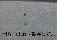 201006126.jpg