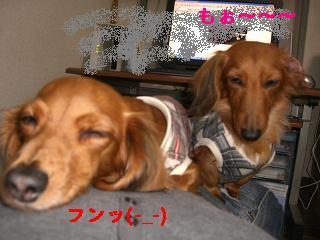 CIMG0335.jpg