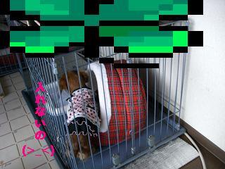 CIMG0505.jpg