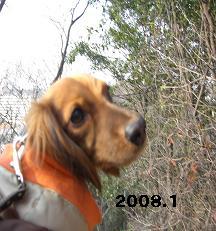 CIMG4958_20091123111817.jpg