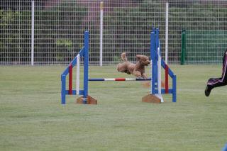 LADF ジャンプ!