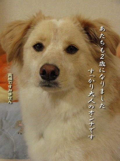 2009_1212_komugi_13.jpg
